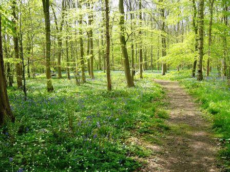 spring-sunshine-walk